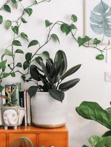 expat living in Brisbane Australia