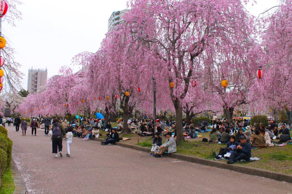living in Sendai Japan