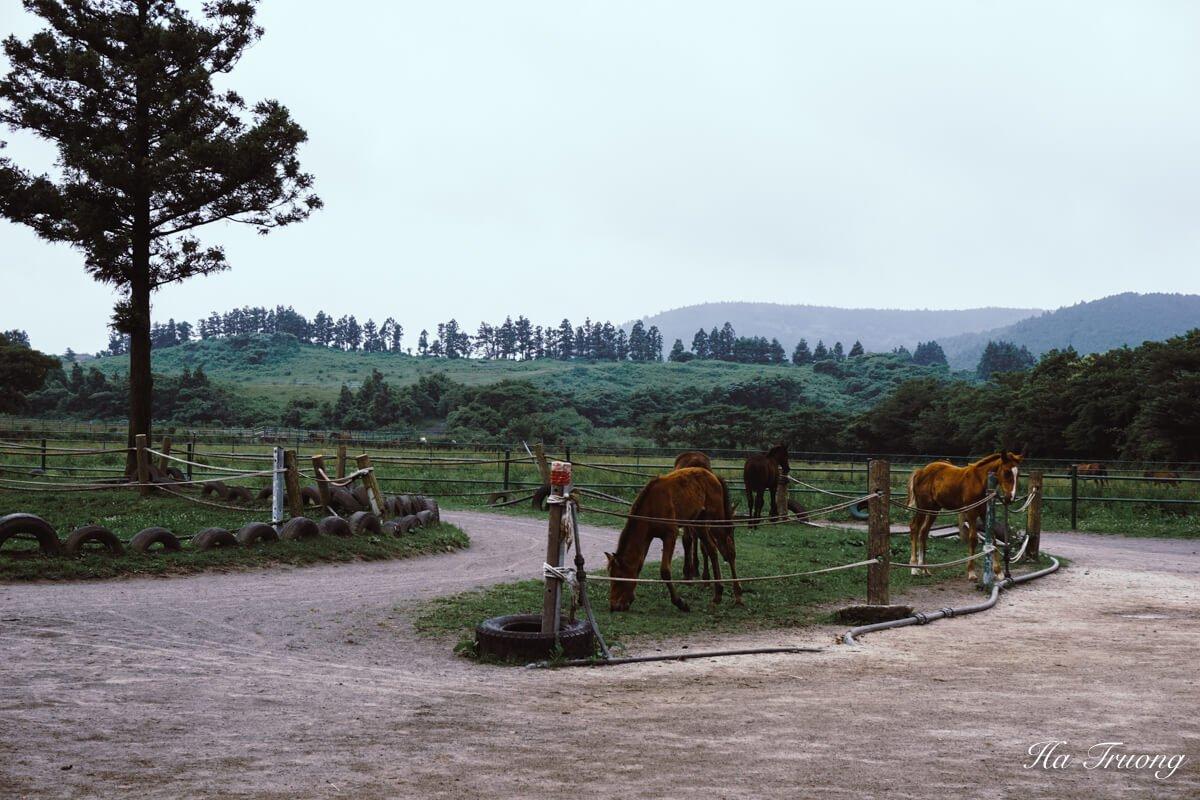 horse riding in Jeju island