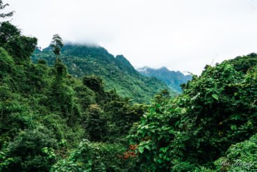 best things to do in Botanical garden Phong Nha Ke Bang Vietnam