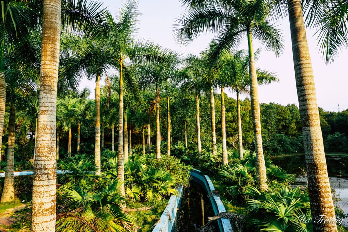 best things to see at Thuy Tien lake abandoned water park Hue Vietnam