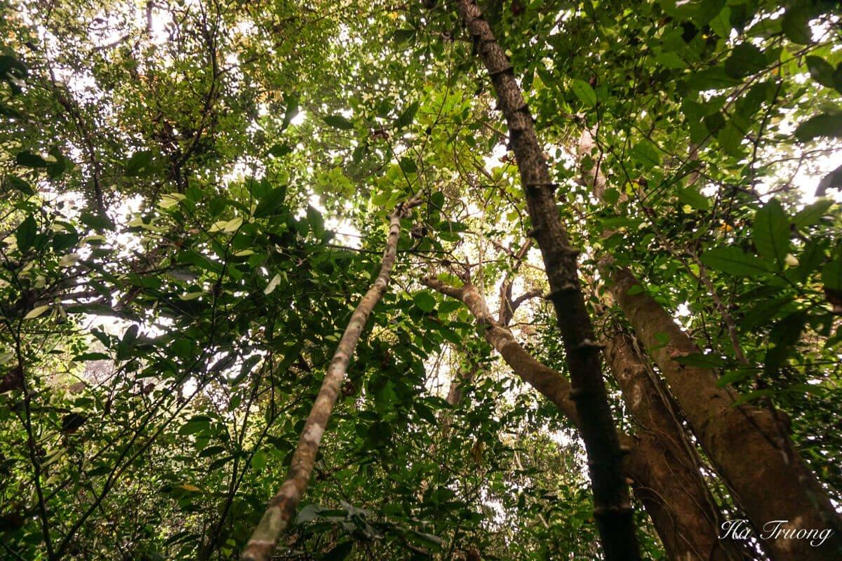 Cat Ba National Park jungle