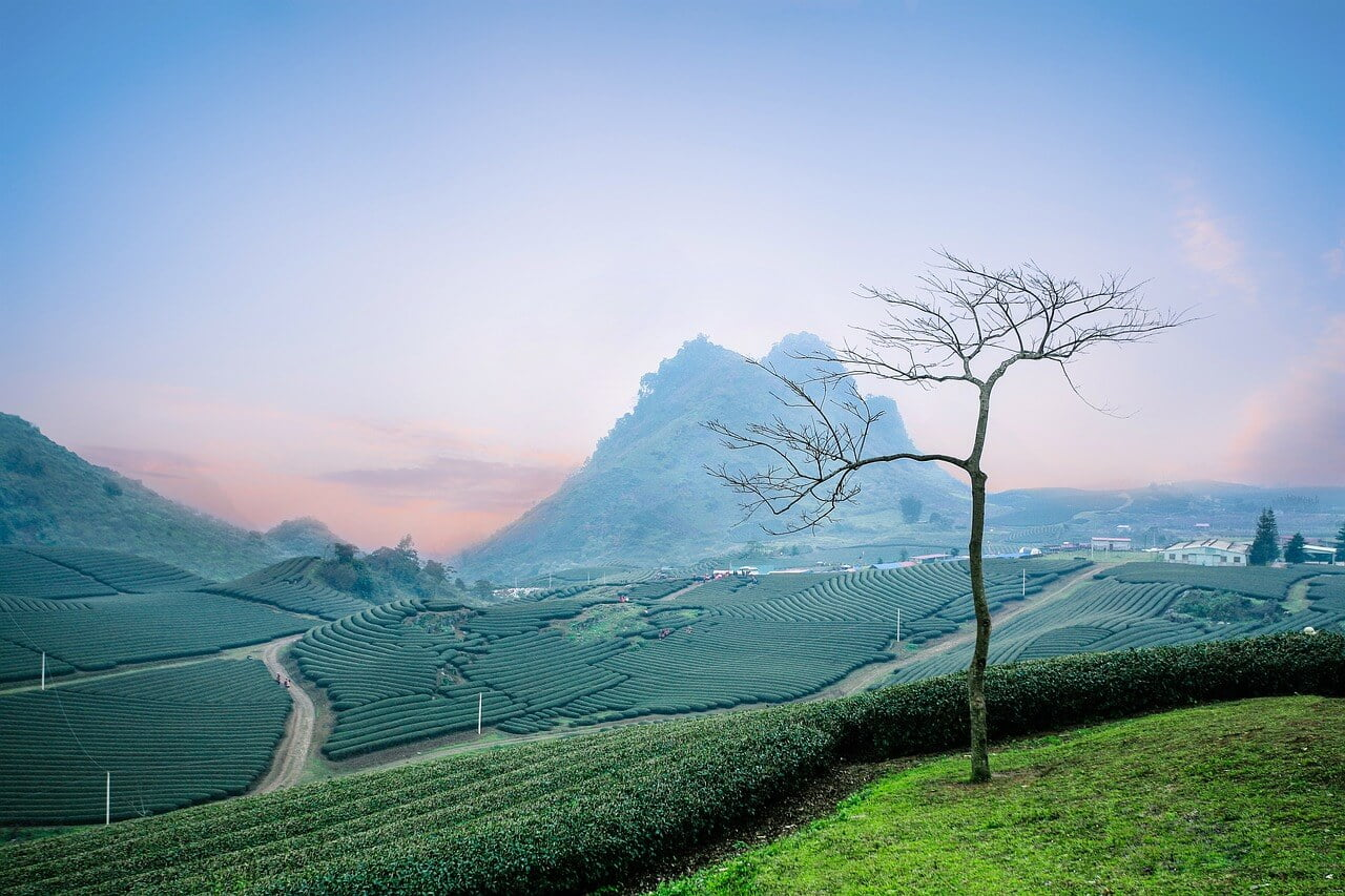 best things to do in Moc Chau Vietnam