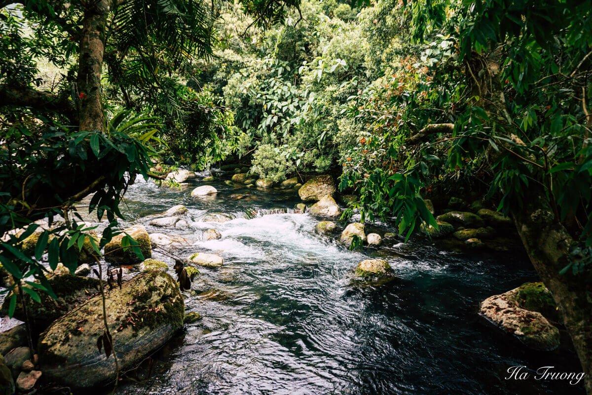 Mooc Stream Phong Nha Vietnam