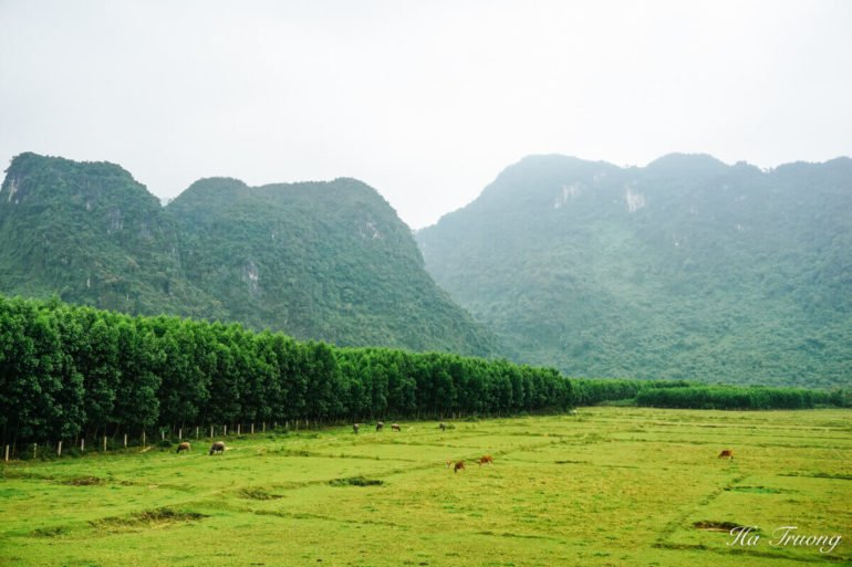 how to get from Hue to Phong Nha Vietnam