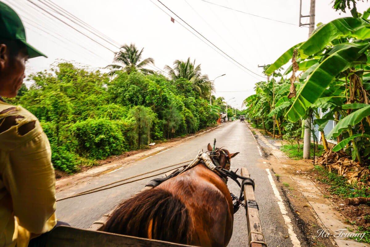 My Tho Vietnam horse