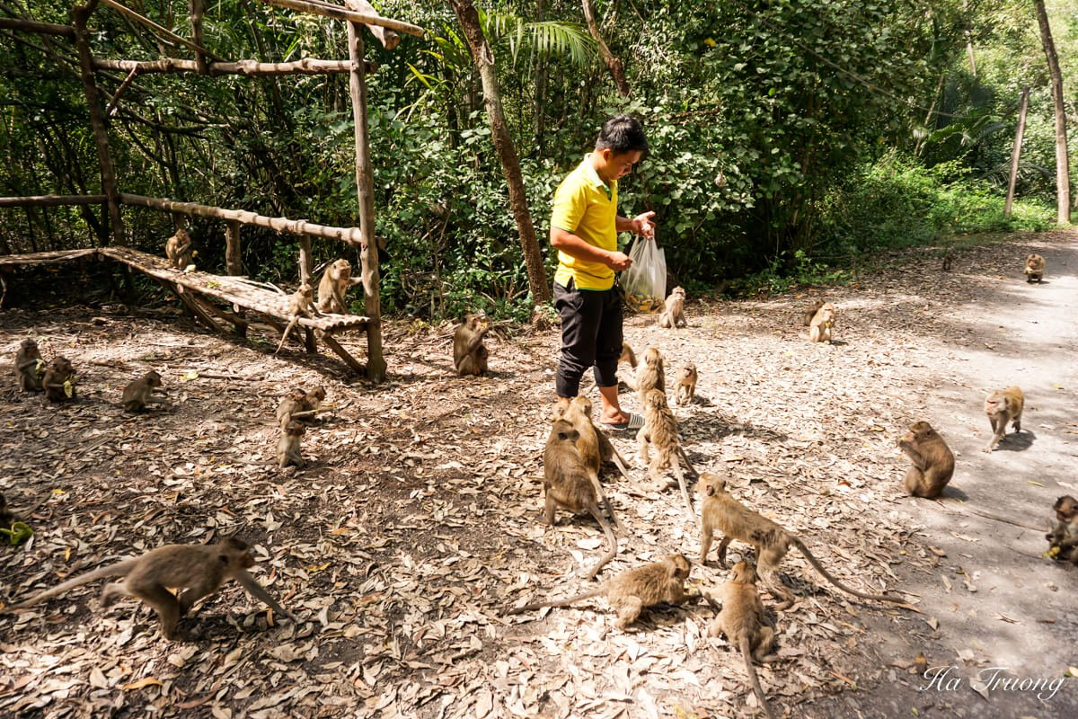 Can Gio Vietnam Monkey island
