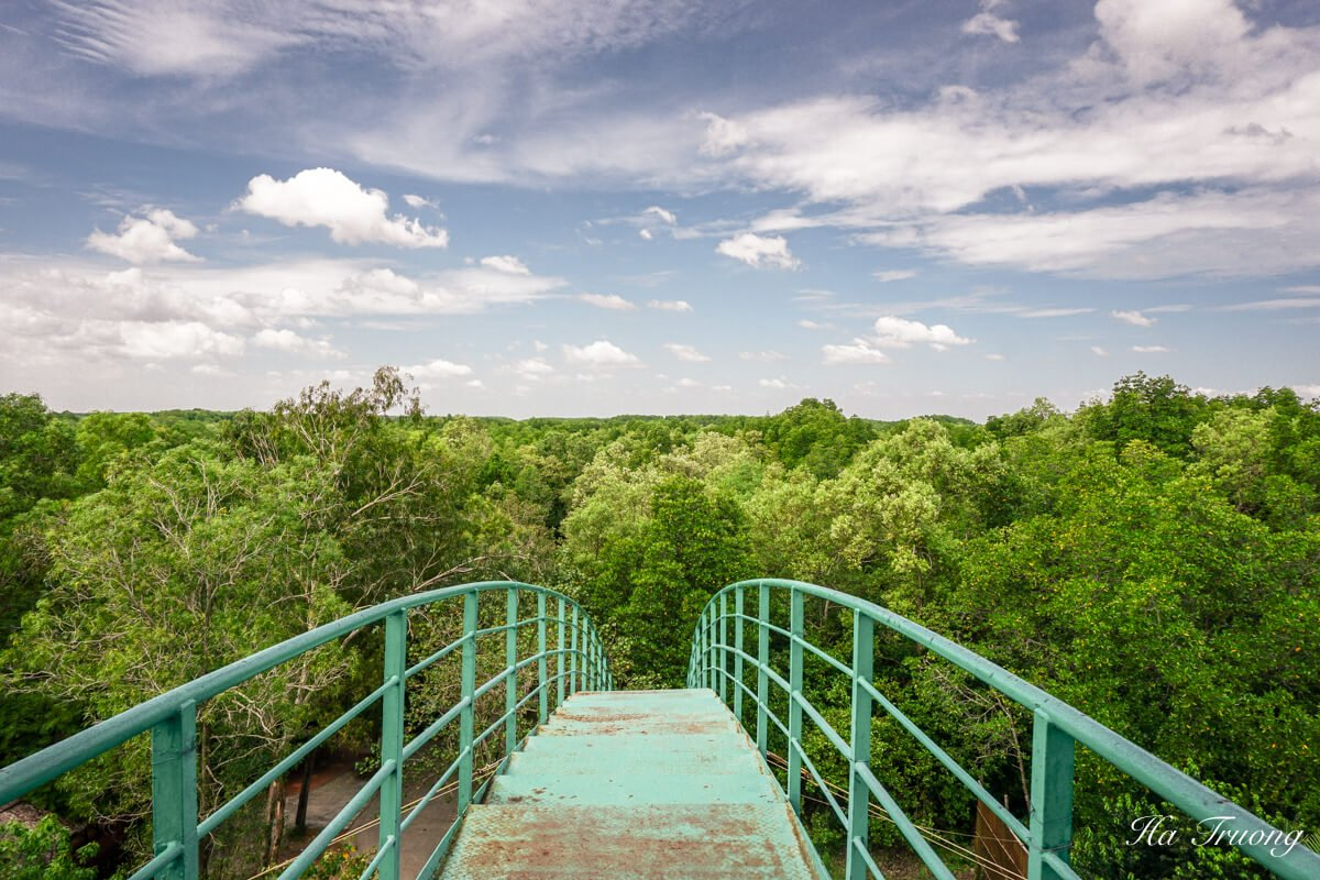 Can Gio Mangrove Forest Vietnam