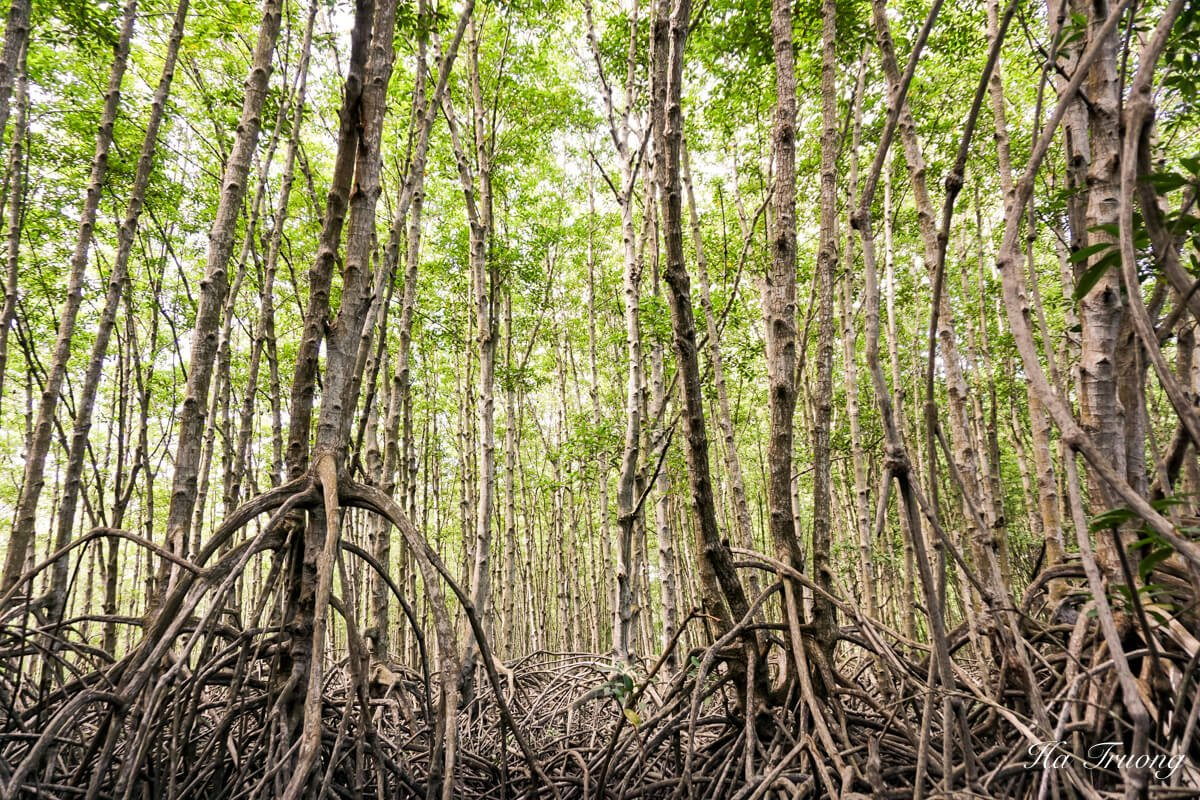 Can Gio Vietnam Mangrove Forest