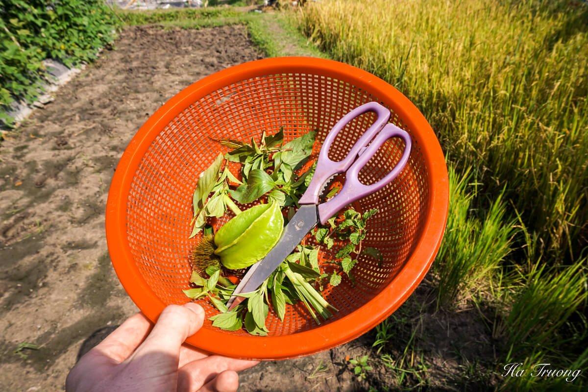 HCM cooking class garden