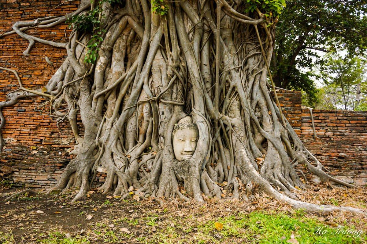 Buddha head embedded in a Banyan tree Ayutthaya Thailand