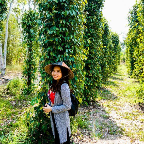 Phu Quoc Pepper farm Vietnam