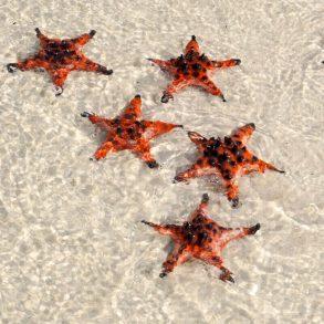 starfish beach Phu Quoc island Vietnam