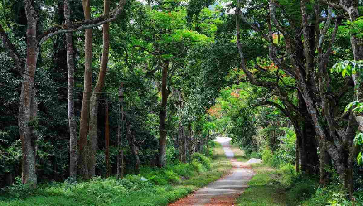 Cuc Phuong National Park Vietnam