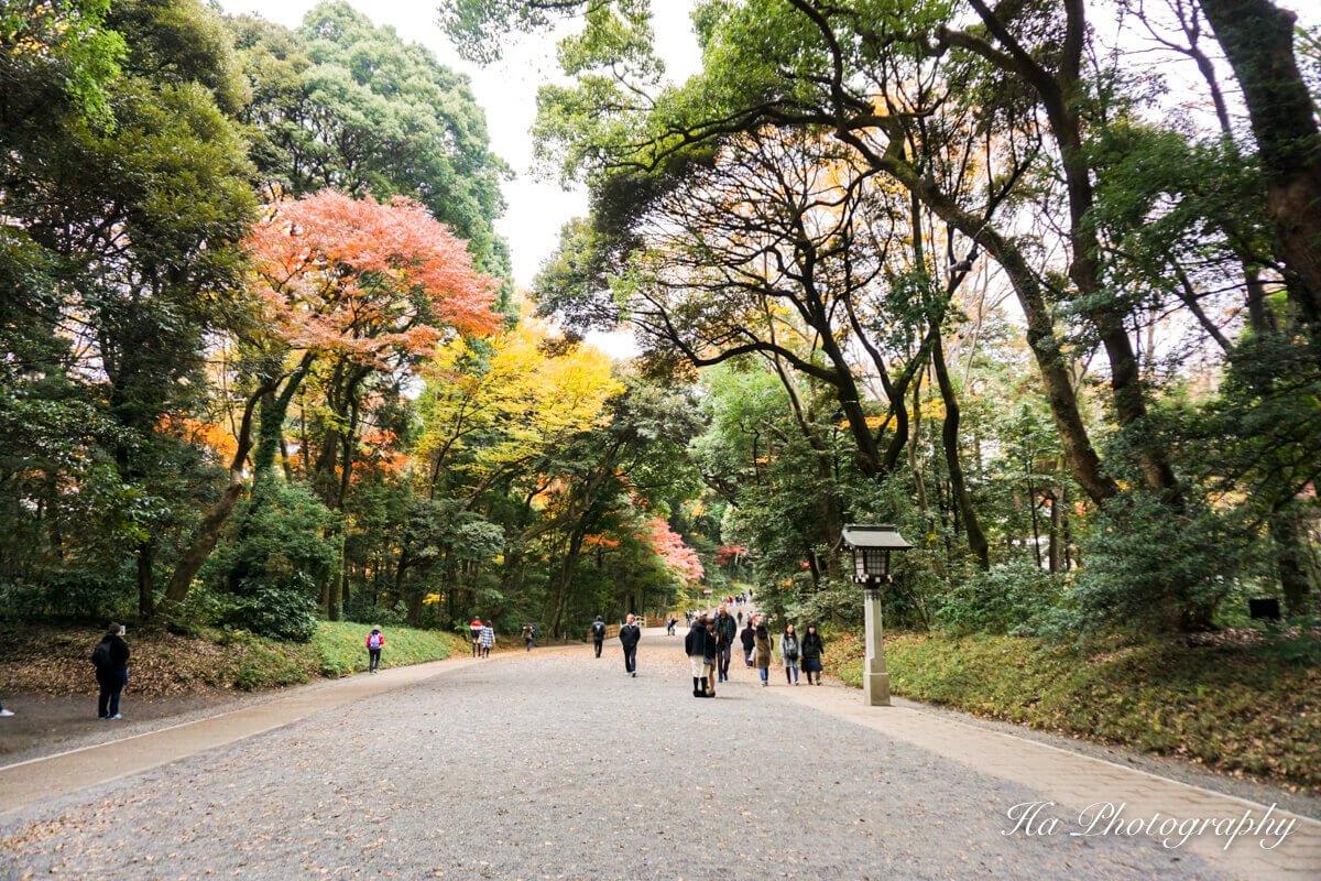 Meiji Jingu Tokyo Japan forest