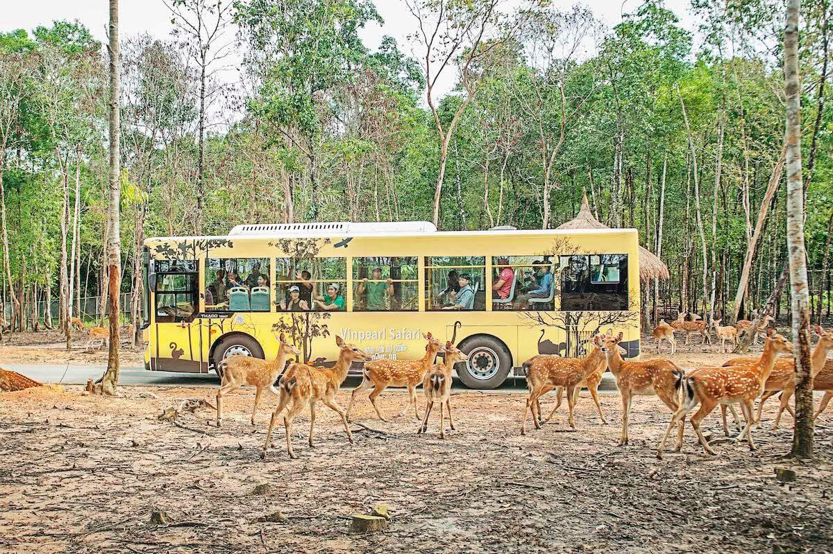 Safari Vinpearland Phu Quoc Vietnam