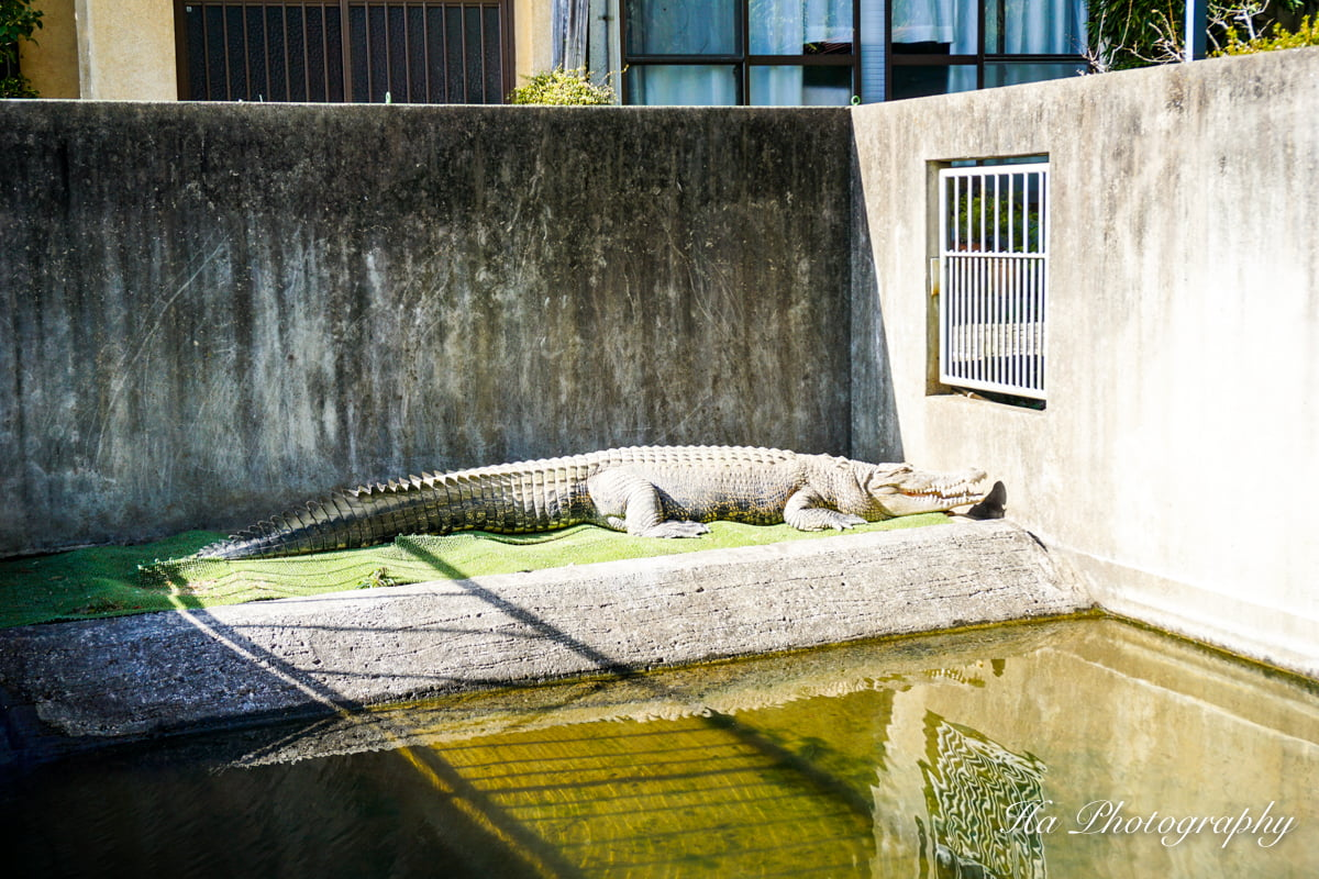 Oniyama Jigoku Beppu Japan