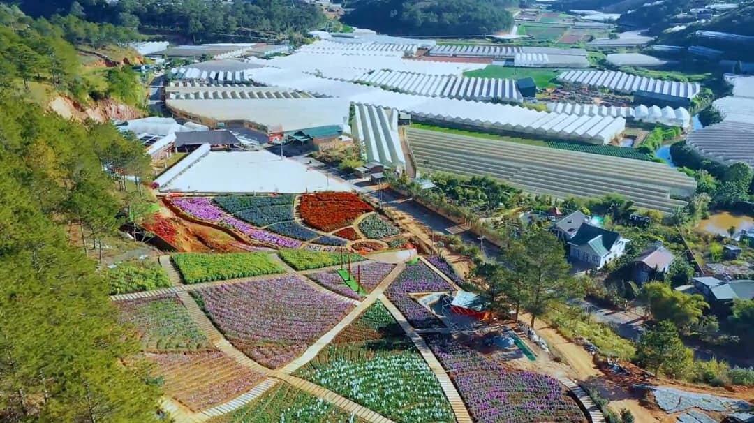 Da Lat flower field Vietnam
