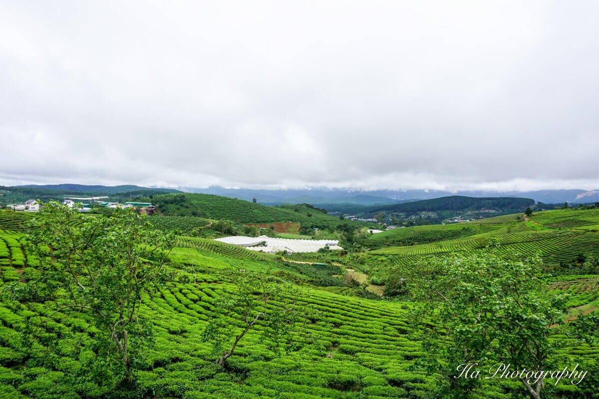 Cau Dat farm Da Lat Vietnam