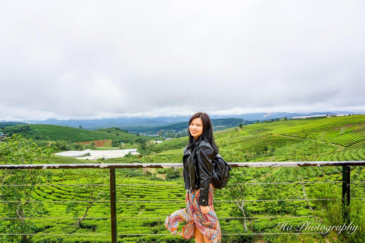 Da Lat tea hill Vietnam