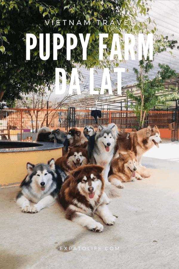 Puppy farm Dalat Vietnam