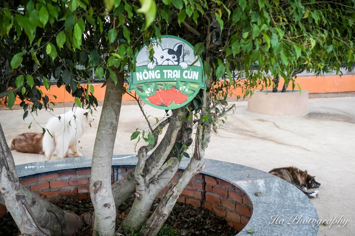puppy farm Da Lat Vietnam