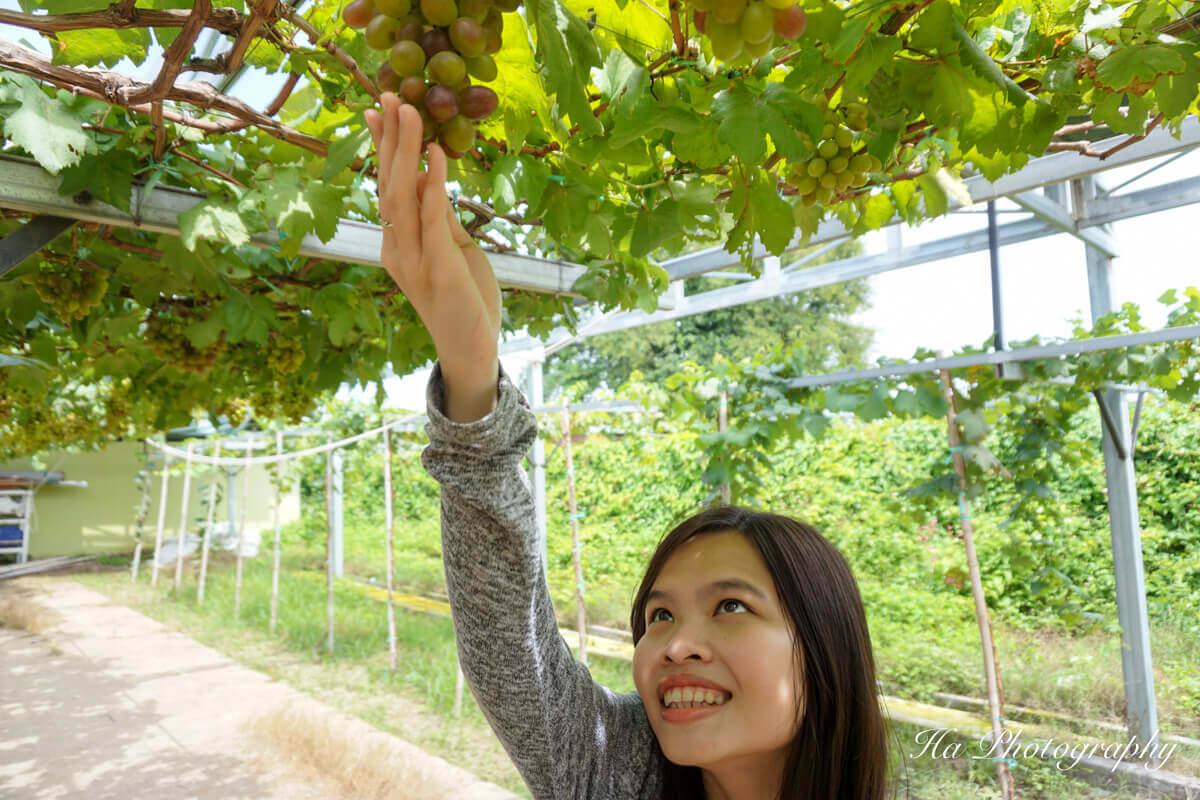 Ba Moi vineyard Phan Rang Vietnam