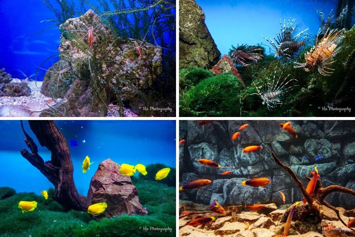 Nha Trang fish museum Vietnam