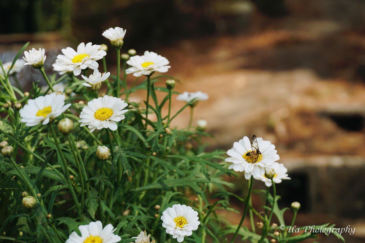 Da Lat flower