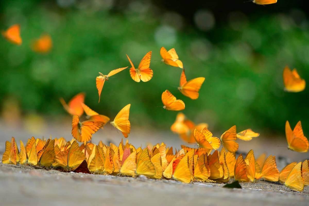 Cuc Phuong Park Vietnam butterfly.