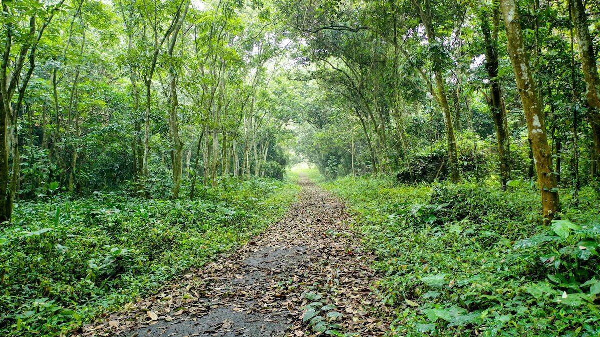 Cuc Phuong Park Vietnam path.