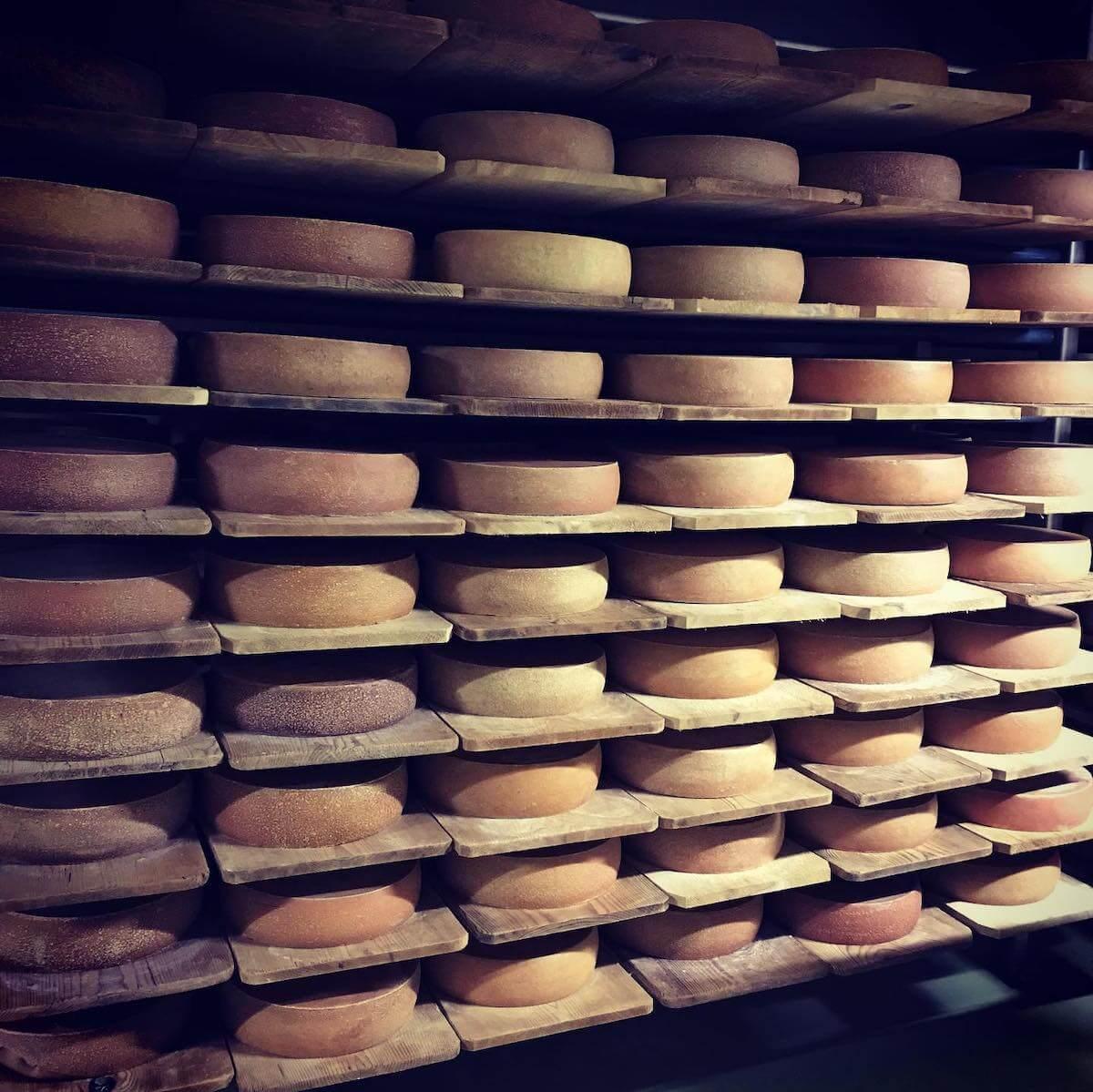 cheese farm.