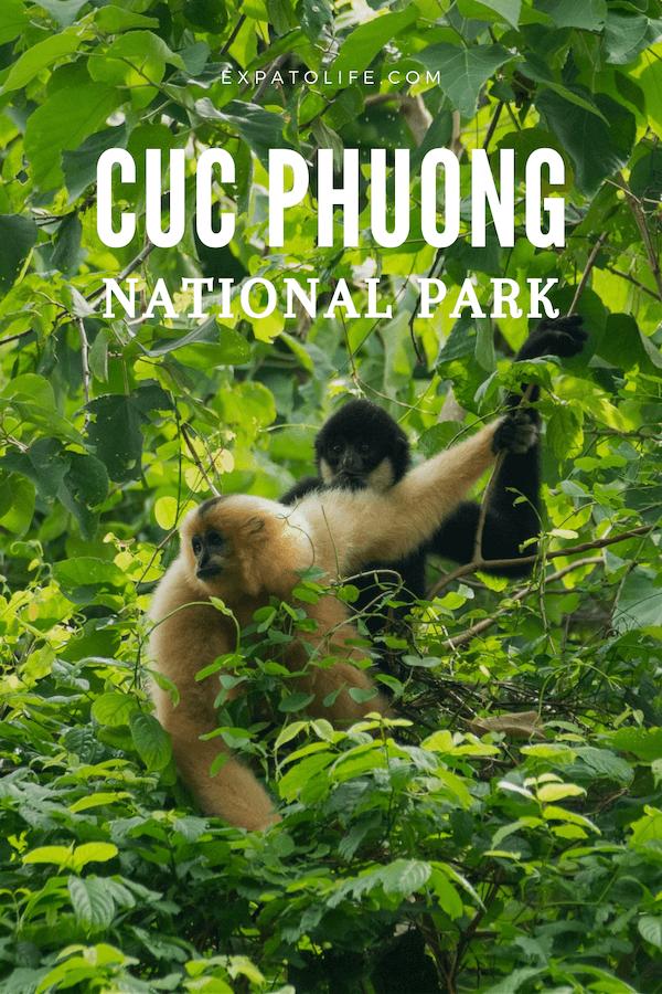 Cuc Phuong National Park Vietnam.